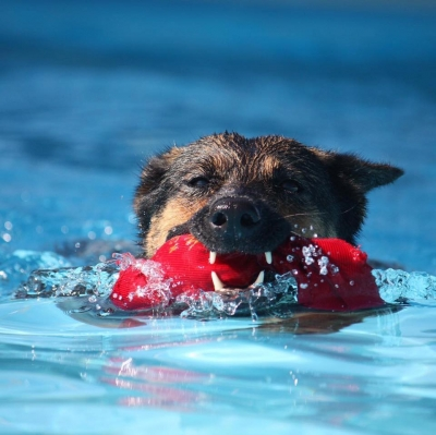 DockDogs® at Splash Down @ Splashes N Wags WC